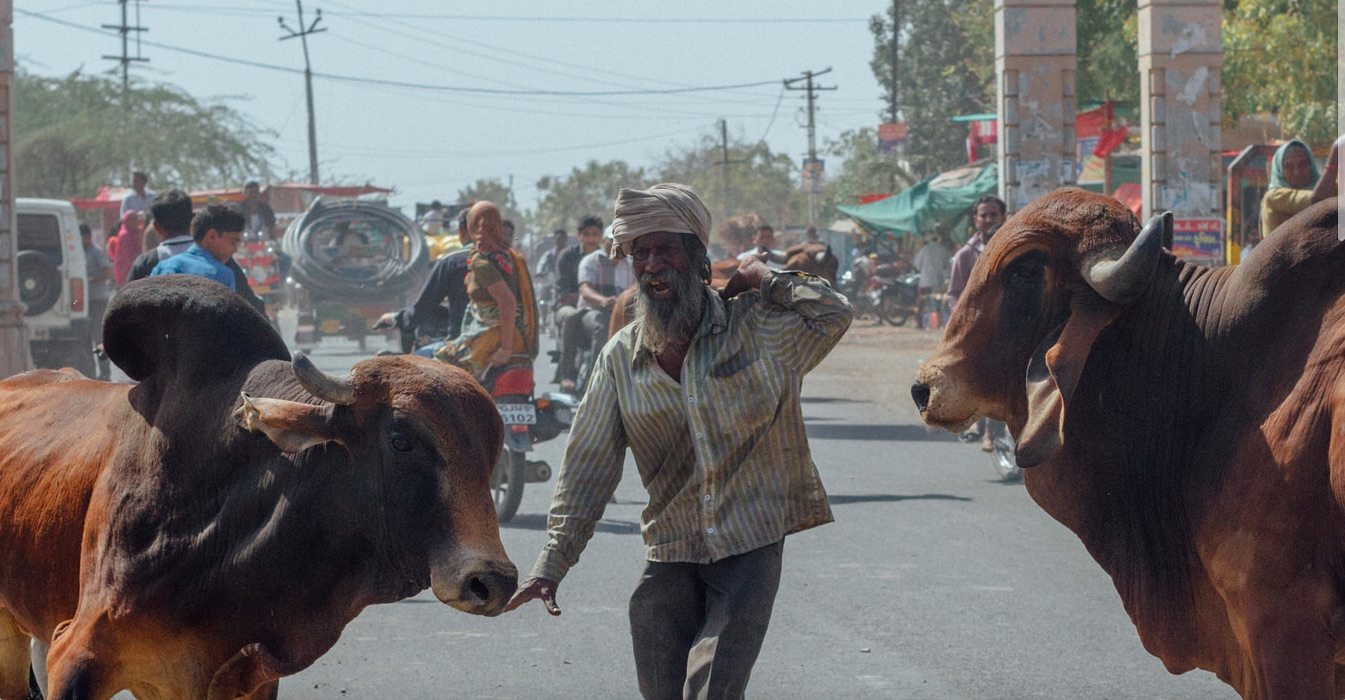 An Adivasi Dies and Maybe a Bull Too. Guess Which Death the Gujarat Police is Probing?