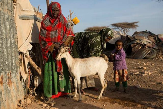 Drought Pushed a Third of Somalia's Population to Extreme Hunger