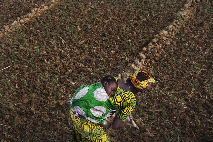 With Help From 'Time Travel', Malians Develop 'Farms of the Future'