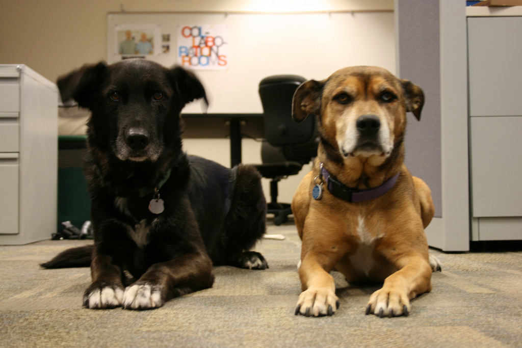 The Dogs Who Have OCD – and What They Can Teach Us