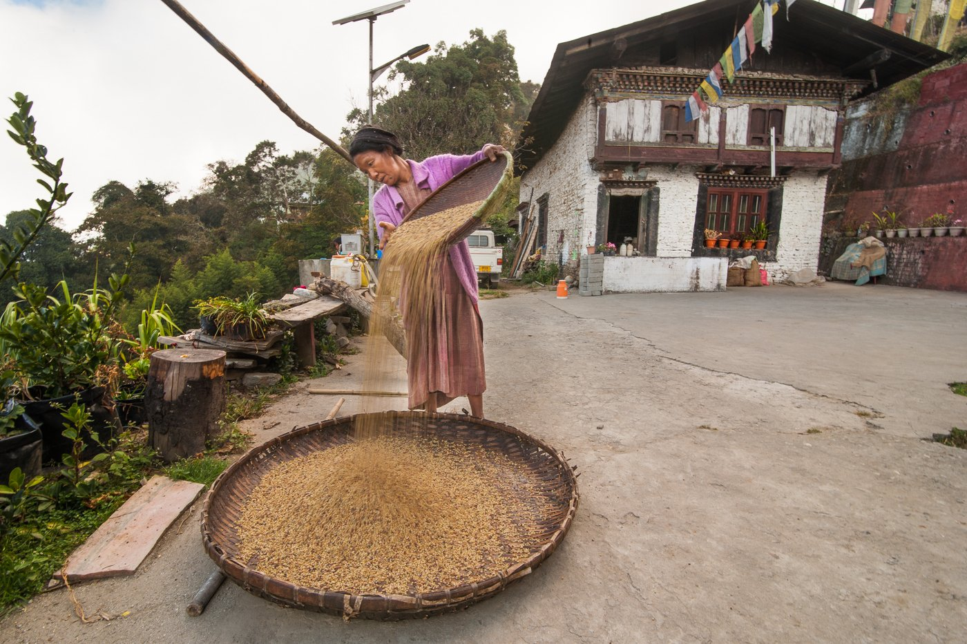 In Thembang village of West Kameng district of Arunachal Pradesh, Jangmu lhopa, a Monpa, is drying baby corn seeds. This crop is a major source of income for the tribe. Credit: Ritayan Mukherjee