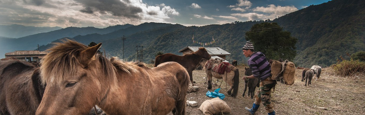 'The Jungle Is Our Mother': The Transitory Life of the Arunachali Brokpa
