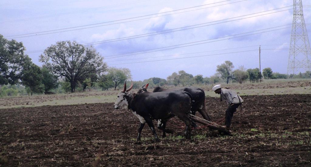 Maharashtra Farmers Fear Loss of Kharif Harvest, Blame Met Department