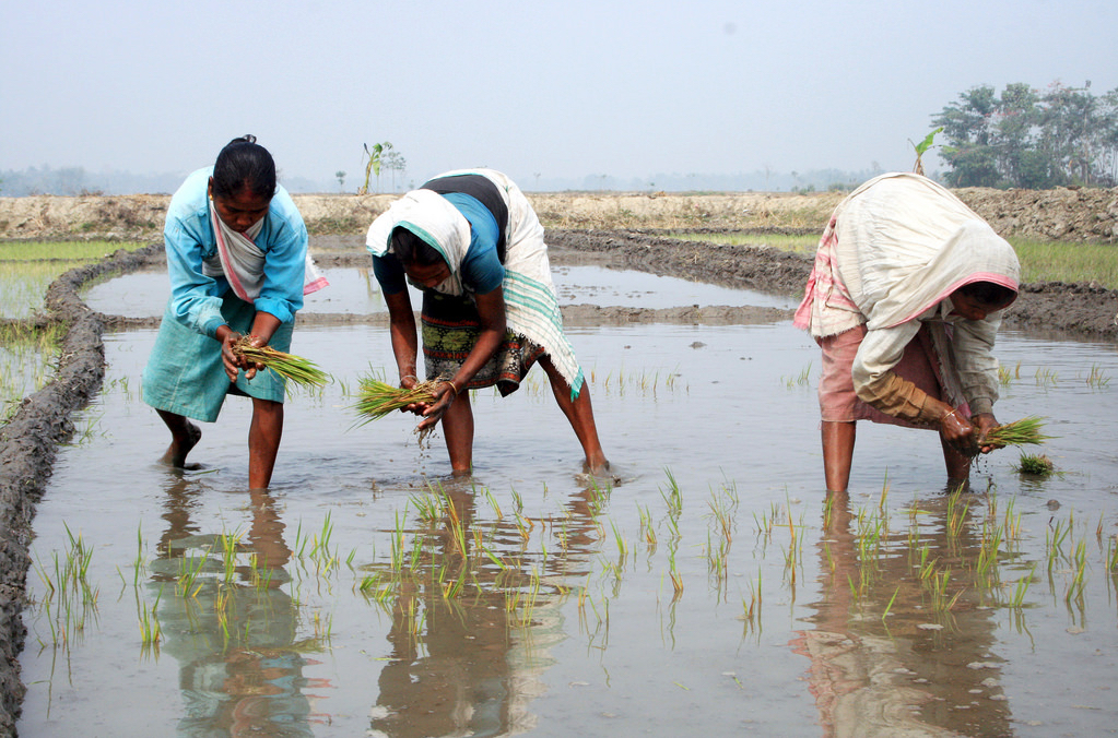 Tribal women are seen sowing rice crops in an agricultural field in the outskirt of Nagaon Town in Assam. Credit: Flickr/Diganta Talukdar