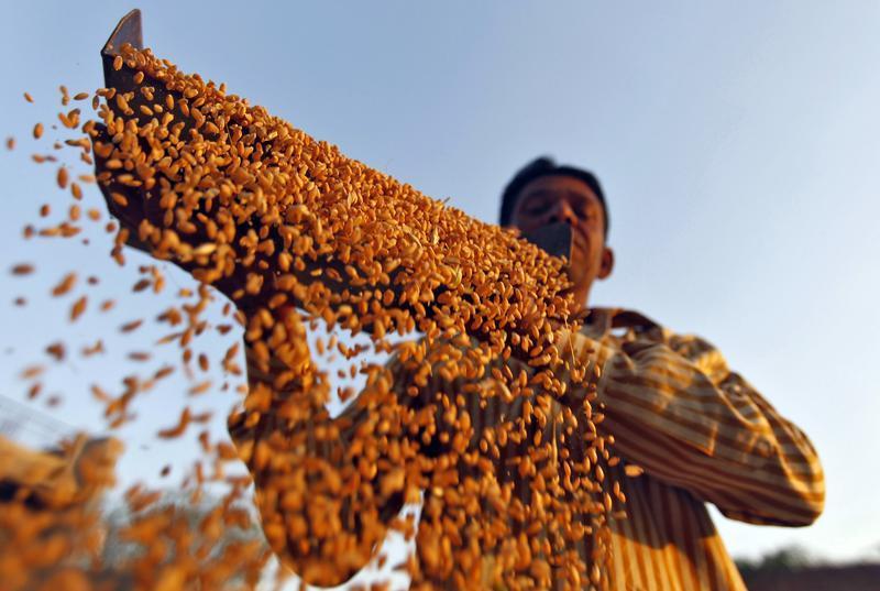 Bihar Did Not Meet Even 1% of its Wheat Procurement Target