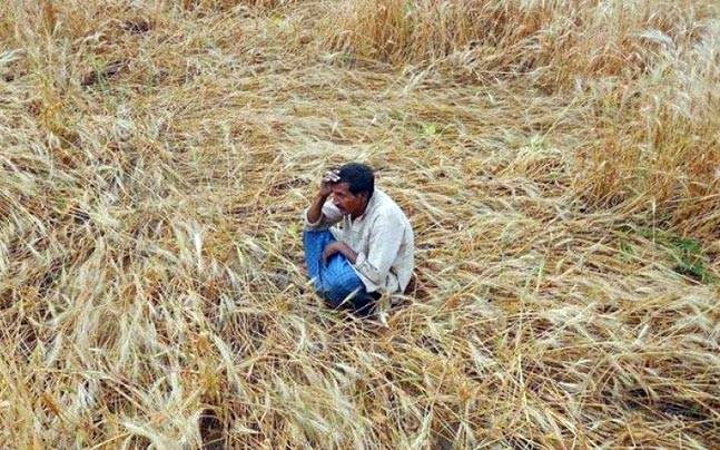 'Government's Crop Insurance Schemes Failed Farmers, Helped Insurance Companies'