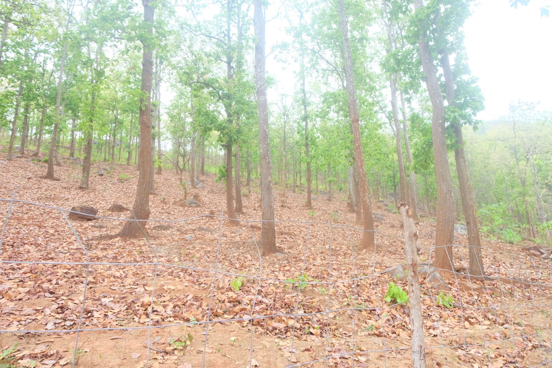 The forest land that has been fenced off in Pidikia. Credit: Gaurav Madan