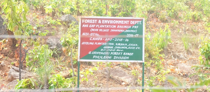 How Tree Plantations Are Violating Citizens' Land Rights in an Odisha Village
