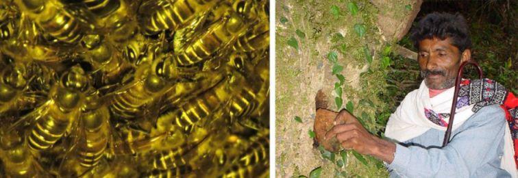 The Honey Hunters of Nilgiri Hills