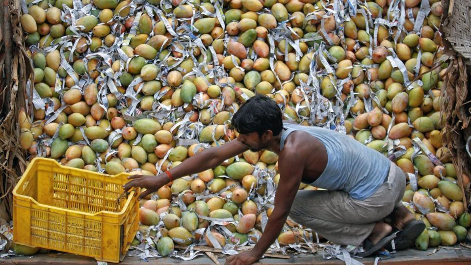 Exploring Mangoes as Metaphor in South Asian Writing