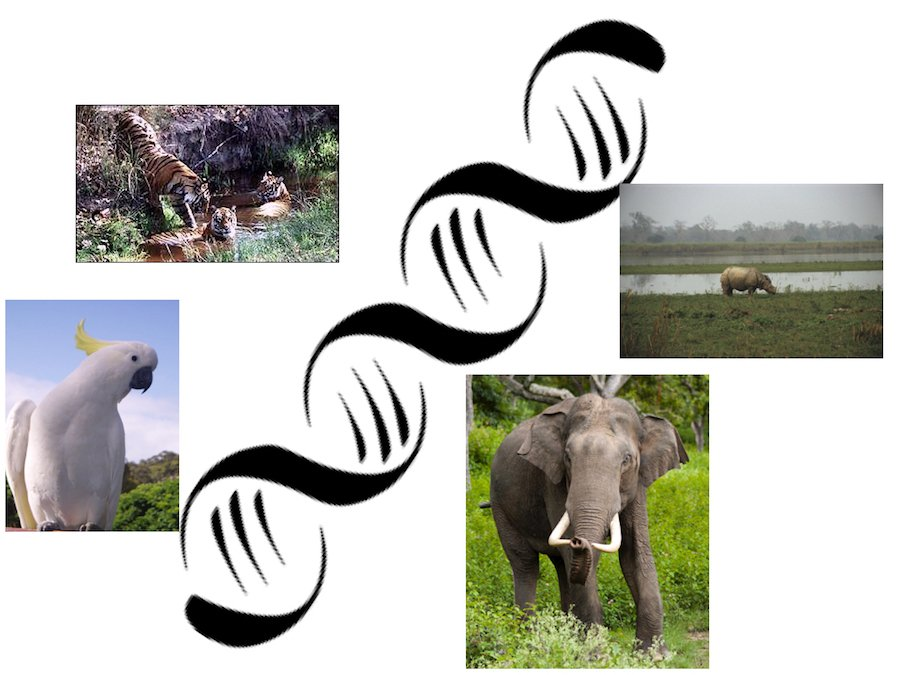 Wildlife Conservation Efforts to Be Bolstered By DNA Bank in Bareilly