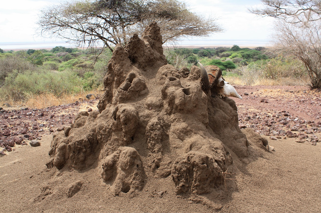 A Method in the Madness: How Termites Build and Repair Their Mounds