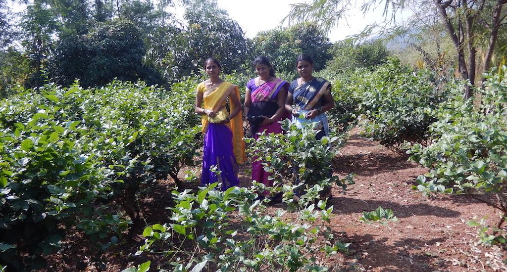 Sangita Mharte guides other women on farming methods for generating a sustained income. Credit: BAIF
