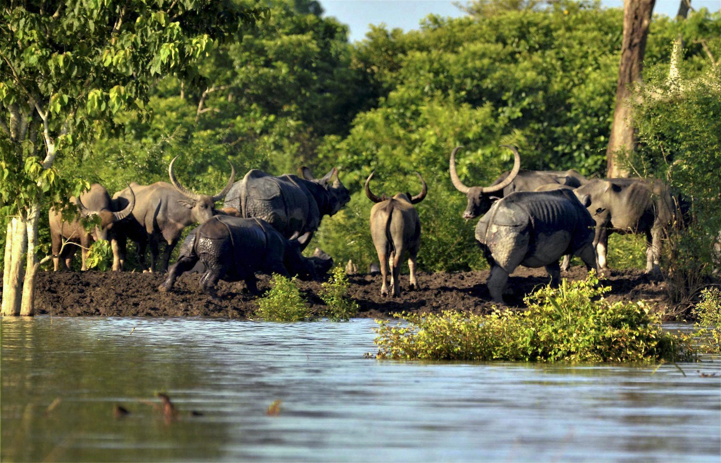SC Bans Mining Activities Along Kaziranga National Park