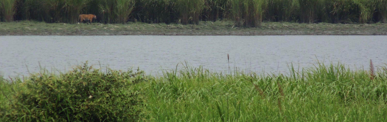 The Rhinos of Kaziranga, Floods of the Brahmaputra, and the Politics of Assam