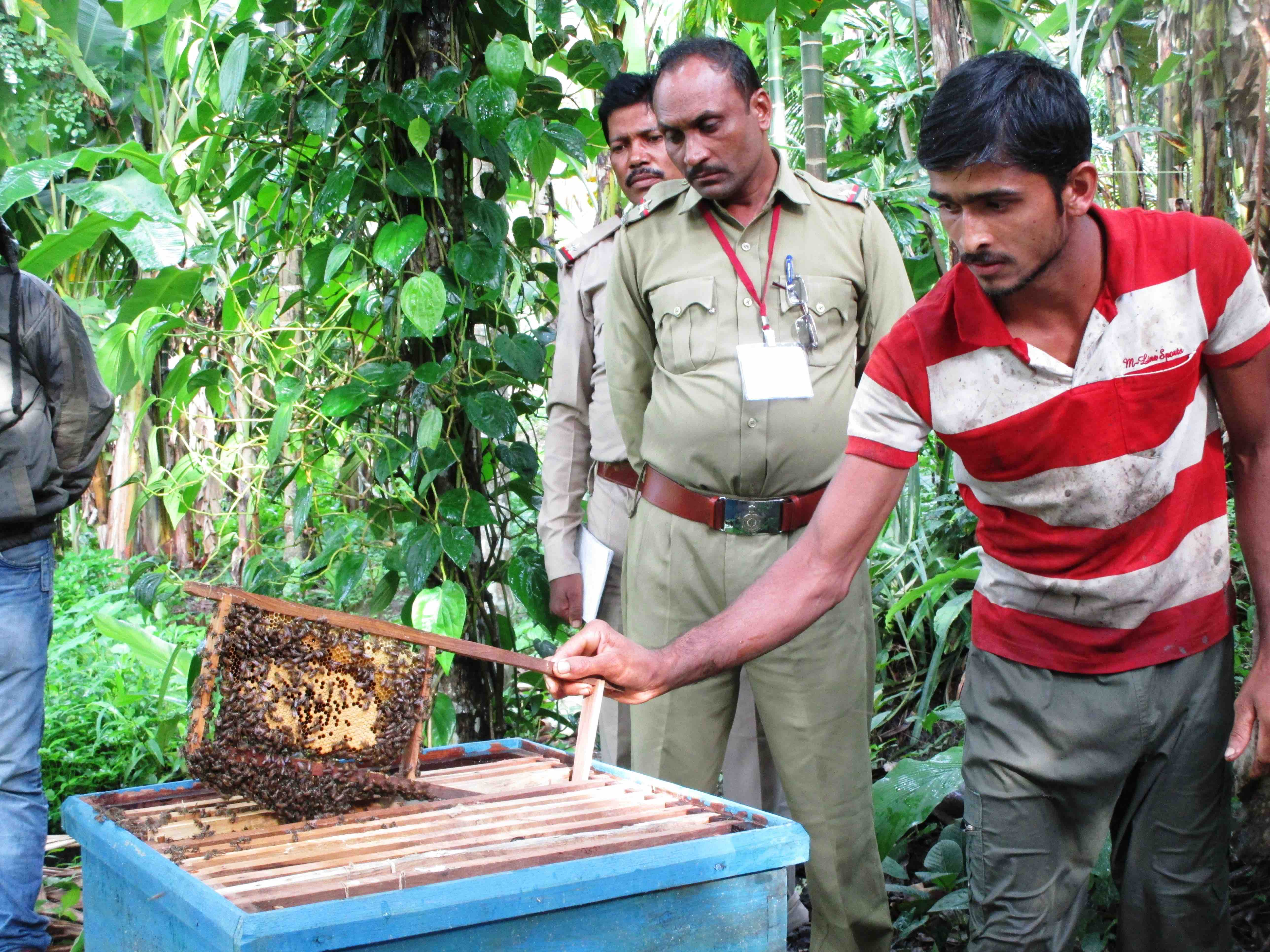 Experimenting with beehive fences to keep elephants away from their fields. Credit: Nidhi Jamwal
