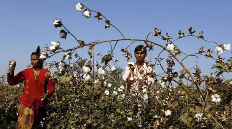Beyond the Green Fields of Punjab Lies a Mounting Agrarian Distress