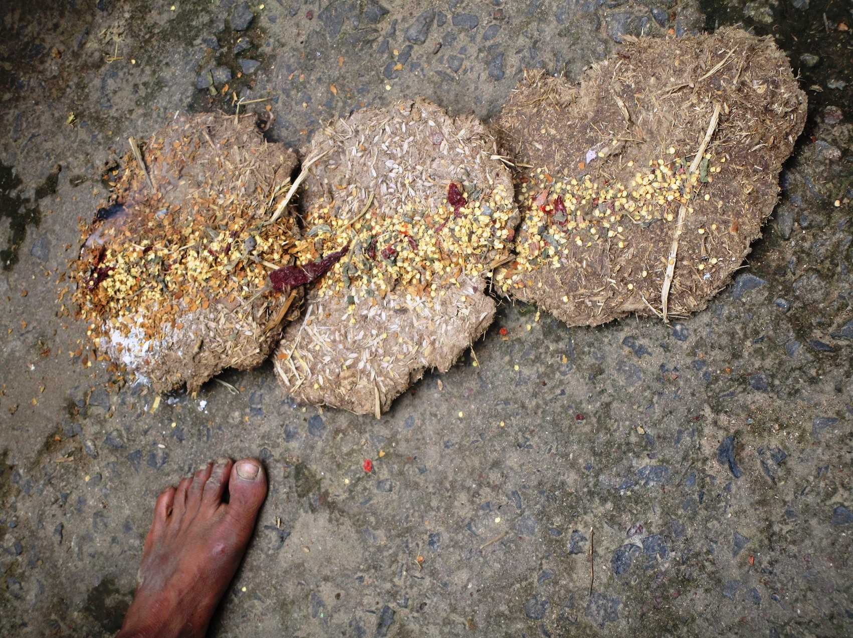 Dry cow dung cakes, waste chilli seeds and are burnt in the night to keep elephants away. Credit: Nidhi Jamwal