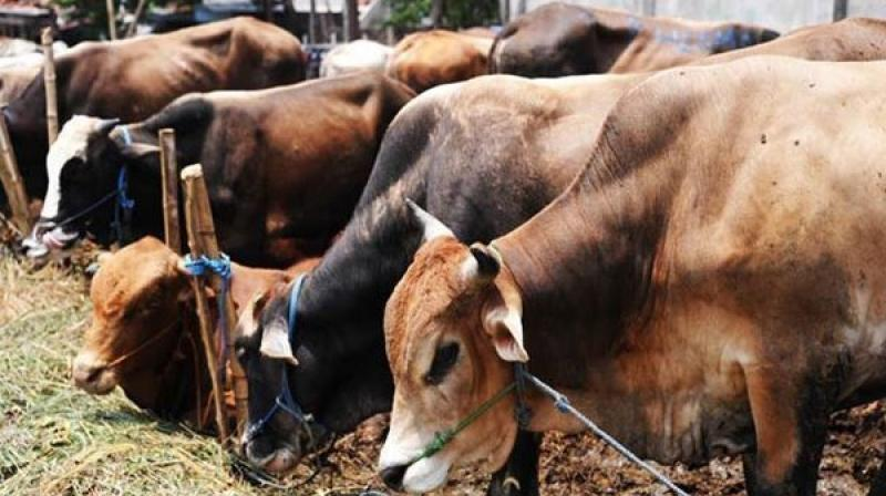 Muslim Men Lynched in West Bengal Over Cow Theft Suspicions