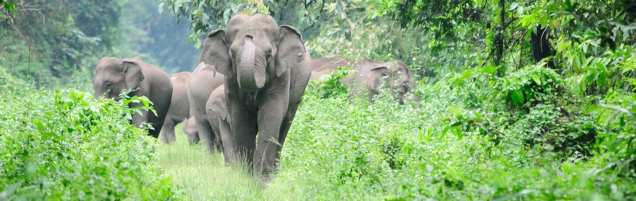 Elephant Census Recalls Gaps in Addressing Conflicts with Humans