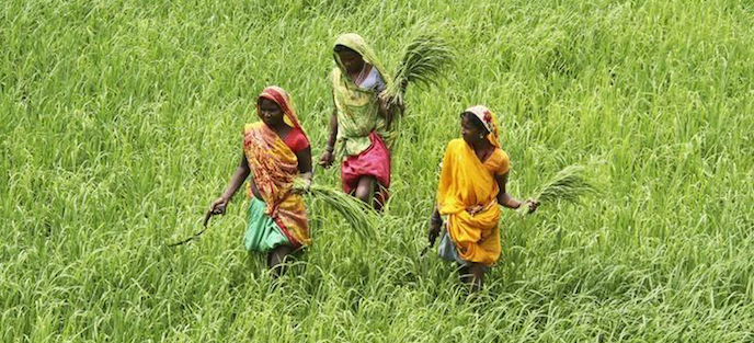 Beyond the Green Fields of Punjab Lies a Mounting Agrarian Distress