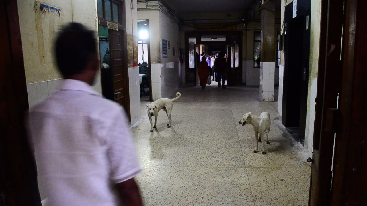 It is common to see dogs roaming around inside wards and in corridors