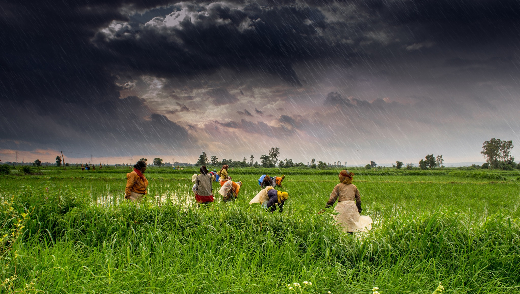 The rain comes down over Jamonia Johar, Madhya Pradesh, in July 2013. Credit: tataimitra/Flickr, CC BY 2.0