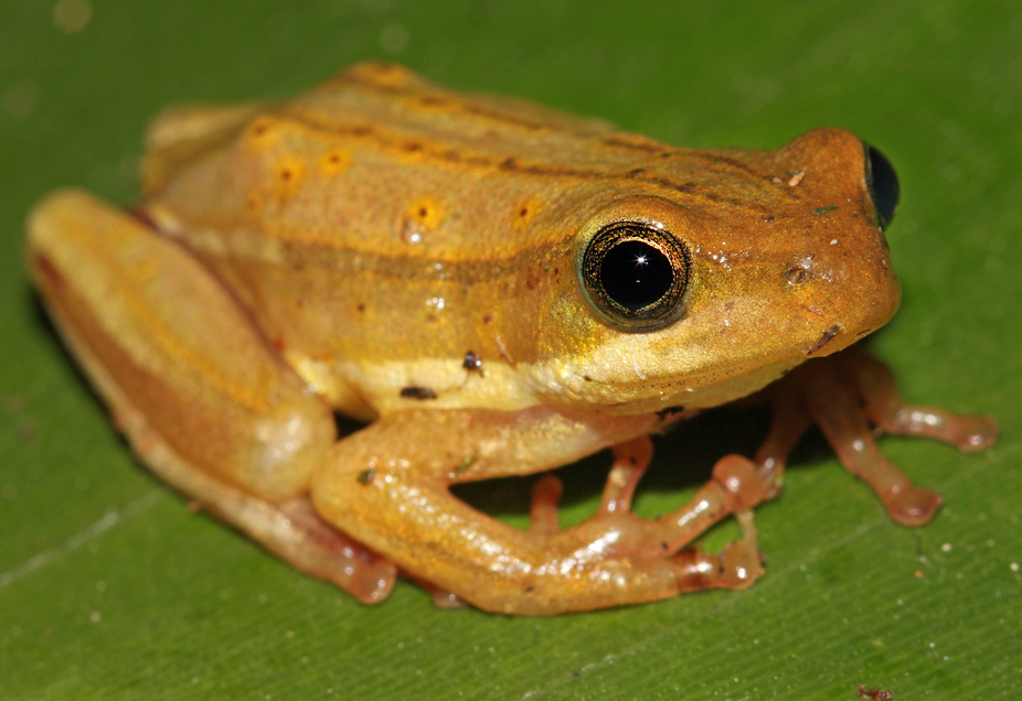 Employing New Techniques to Track Kenya's Fast Disappearing Amphibians