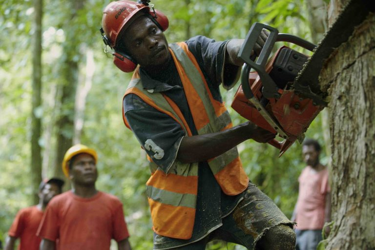 Workers harvesting timber in Tavolo, an FSC-certified community forest management area in New Britain, Papua New Guinea. Credit: Greenpeace/John Novis