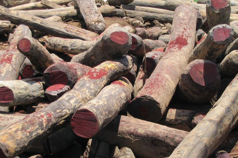 Illegal rosewood stockpiles in Antalaha, Madagascar. Credit: Wikimedia Commons, CC BY-SA 3.0