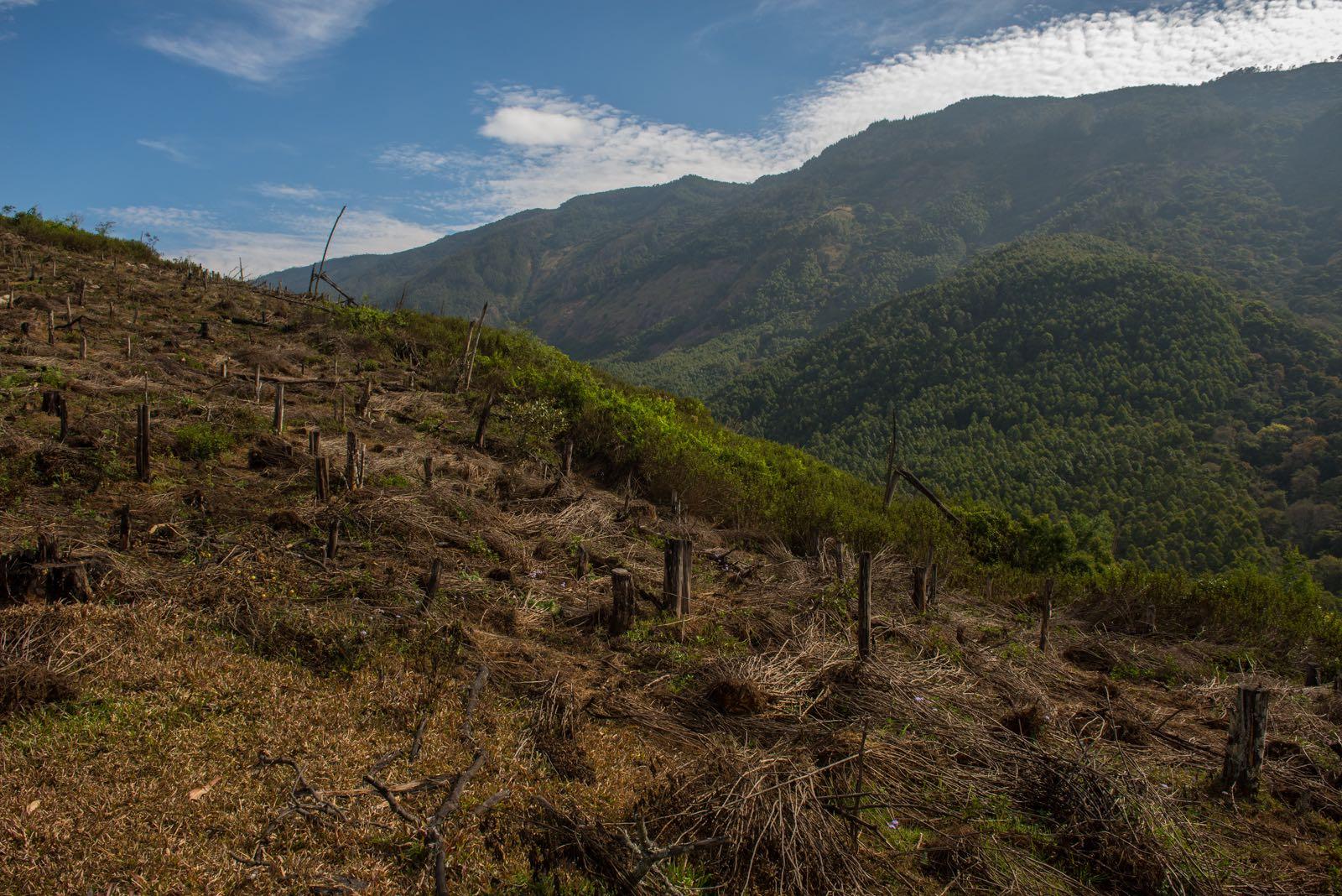 Cleared plantation near Munnar. Credit: Prasenjeet Yadav