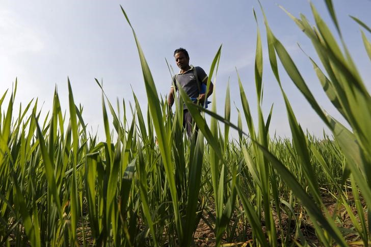 A study by revealed that 88% of the respondent farmers said that the cost-effective INSAP technology had helped them regain the confidence to continue farming. Credit: Reuters