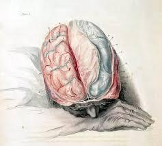 Do You Split the Person When You Split the Brain?
