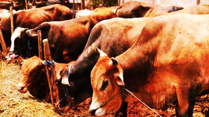 After Pehlu Khan, Umar Mohammed, Transporting Pet Cows, Shot Dead in Alwar