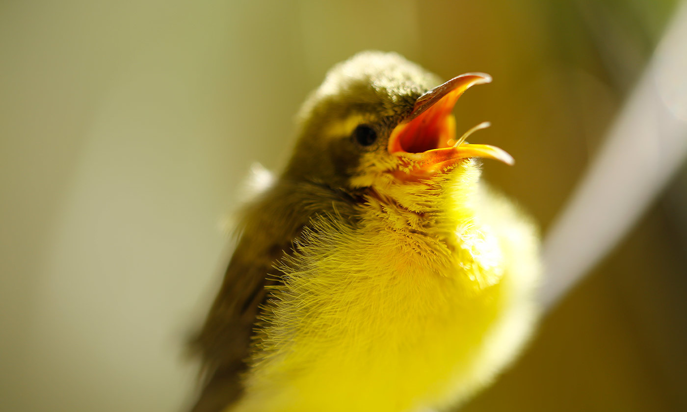Lessons Songbirds Could Teach Us About Constructive Tweeting