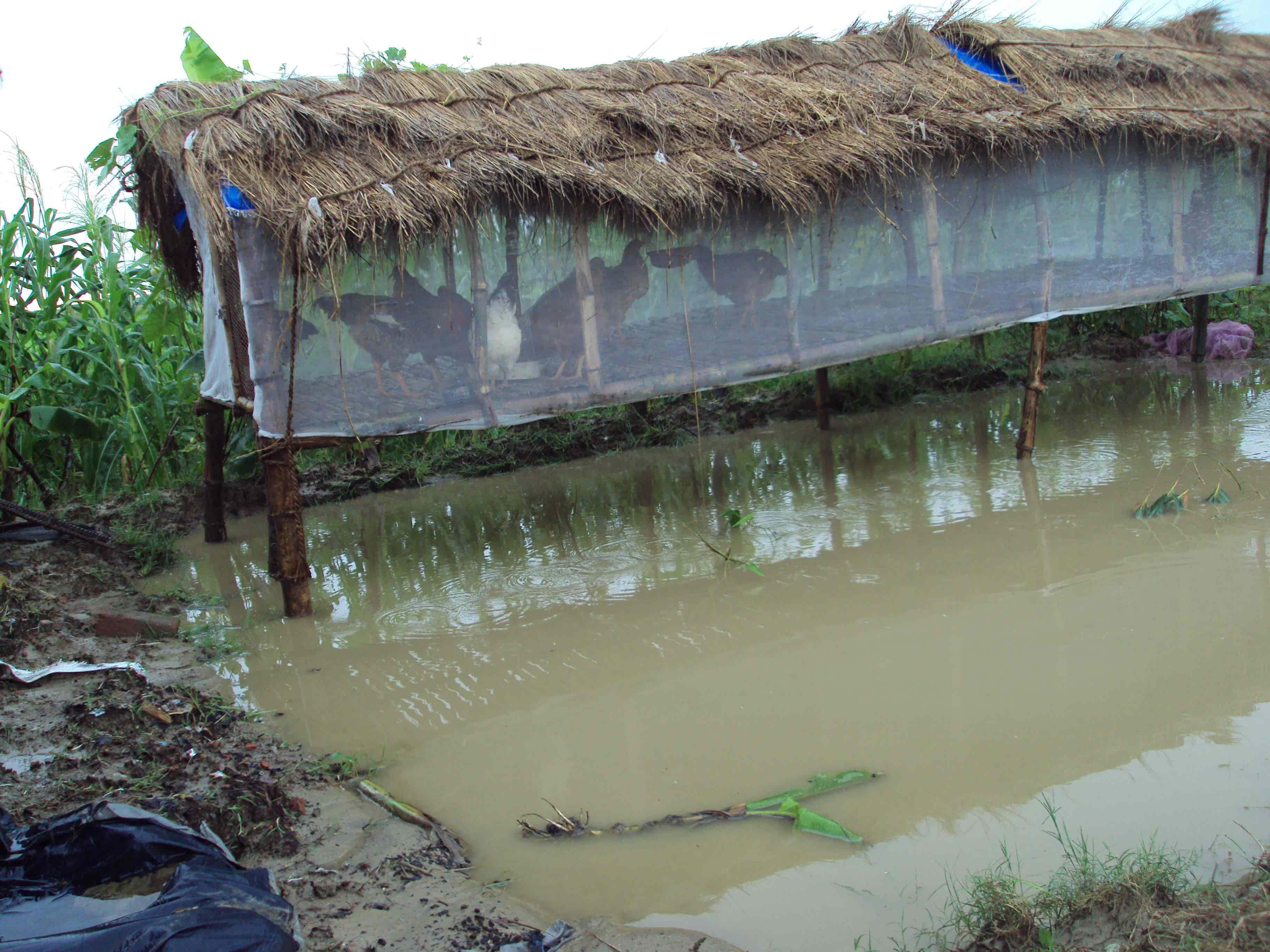 Restoring Livelihoods in Villages After Floods
