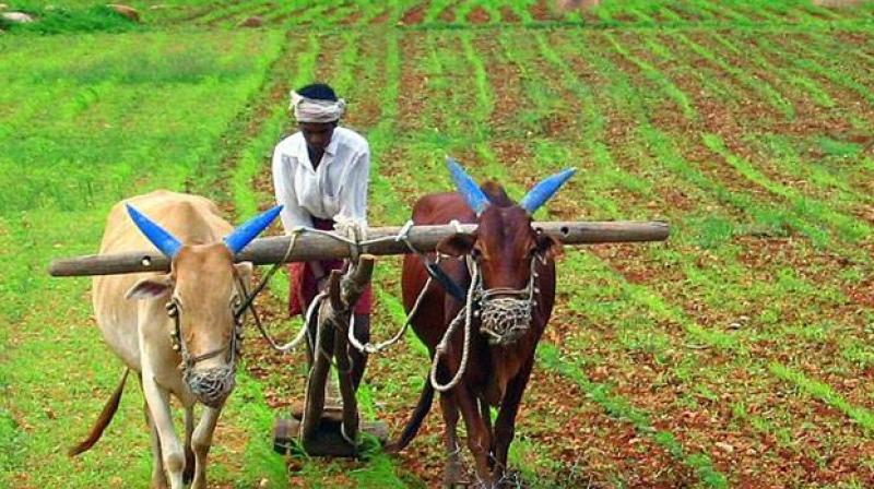 Maharashtra Loan Waiver Hits Roadblock as Lakhs of Farmers With Same Account, Aadhaar Numbers Listed