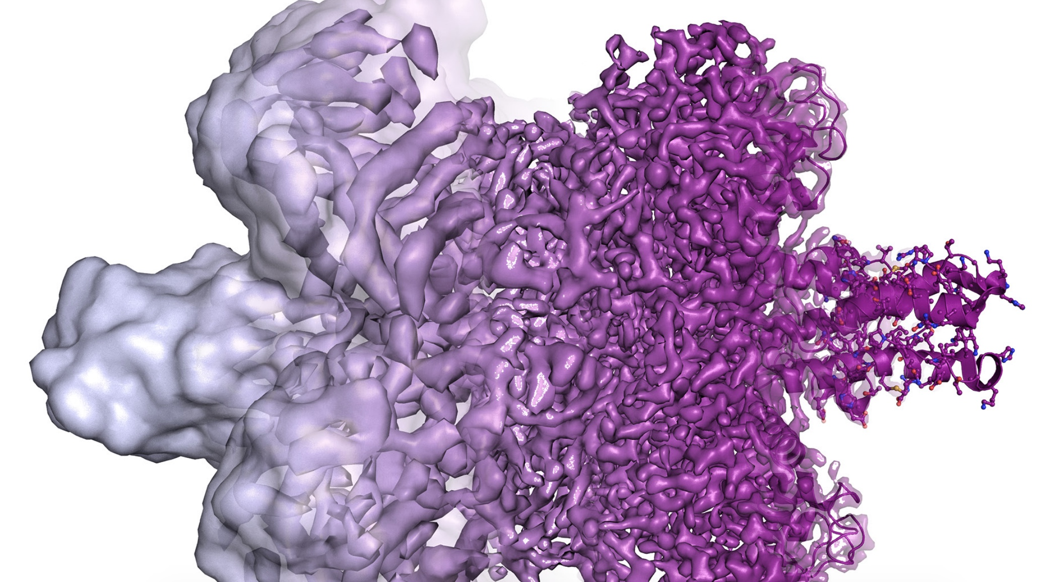 Chemistry Nobel for Cryo-Electron Microscopes, Machines That Can 'See' the Atoms of Life