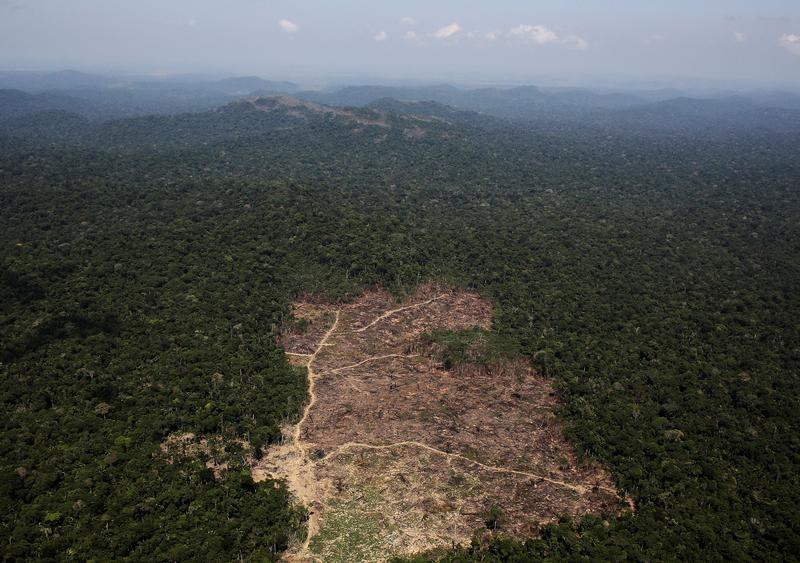 Gold, Lumber, Cattle and Now, Energy – Cycles of Wealth in Brazil's Amazon