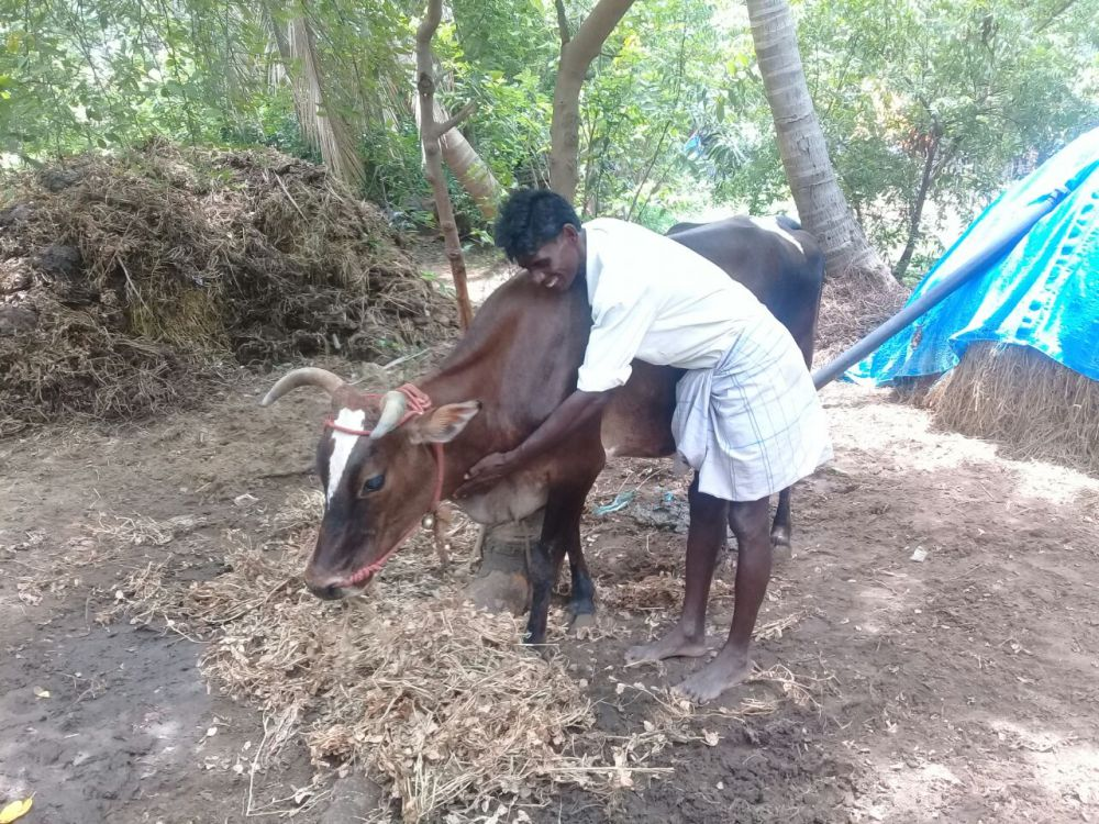 Farmer's Notebook: Organic Farming, Cattle to Meet Manure Needs Can Aid Farmers in Distress