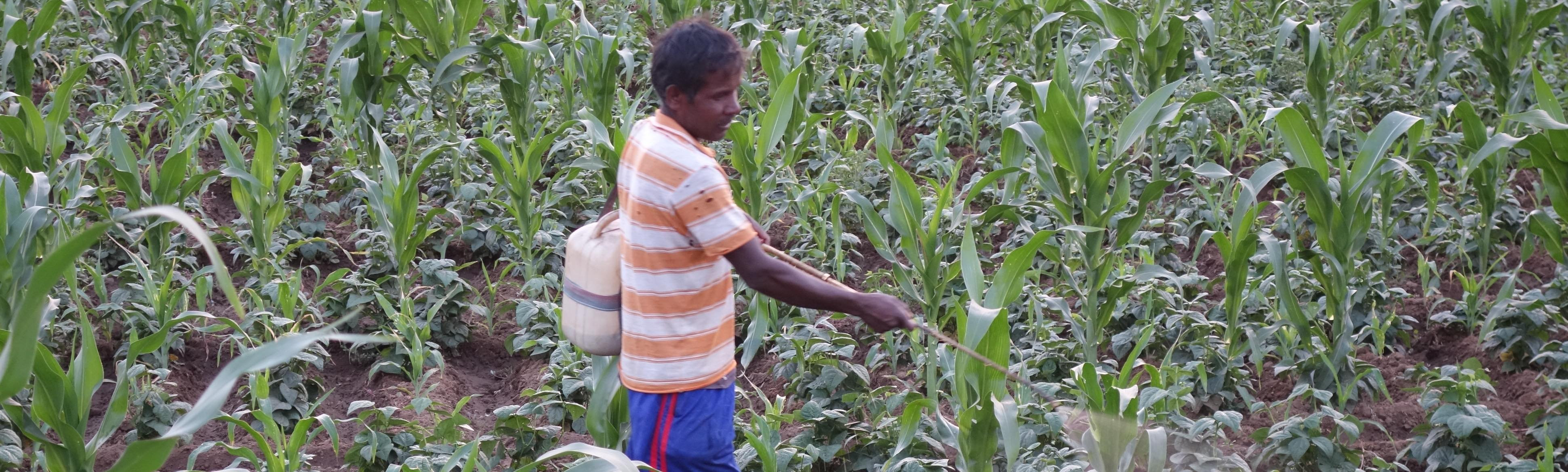Farmers Shouldn't Have to Die Before the Government Addresses Rampant Pesticide Misuse