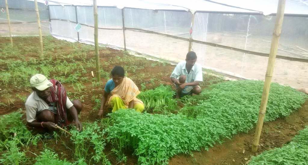 Jharkhand Farmers Turn Rural Entrepreneurs