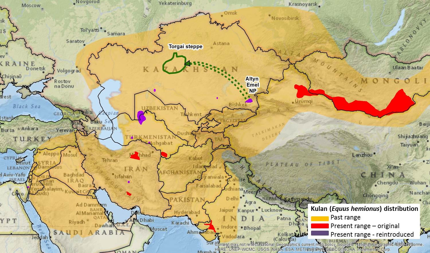 The green arrow shows the relocation effort of the kulan from Altyn Emel to the Torgai steppe. Credit: NINA
