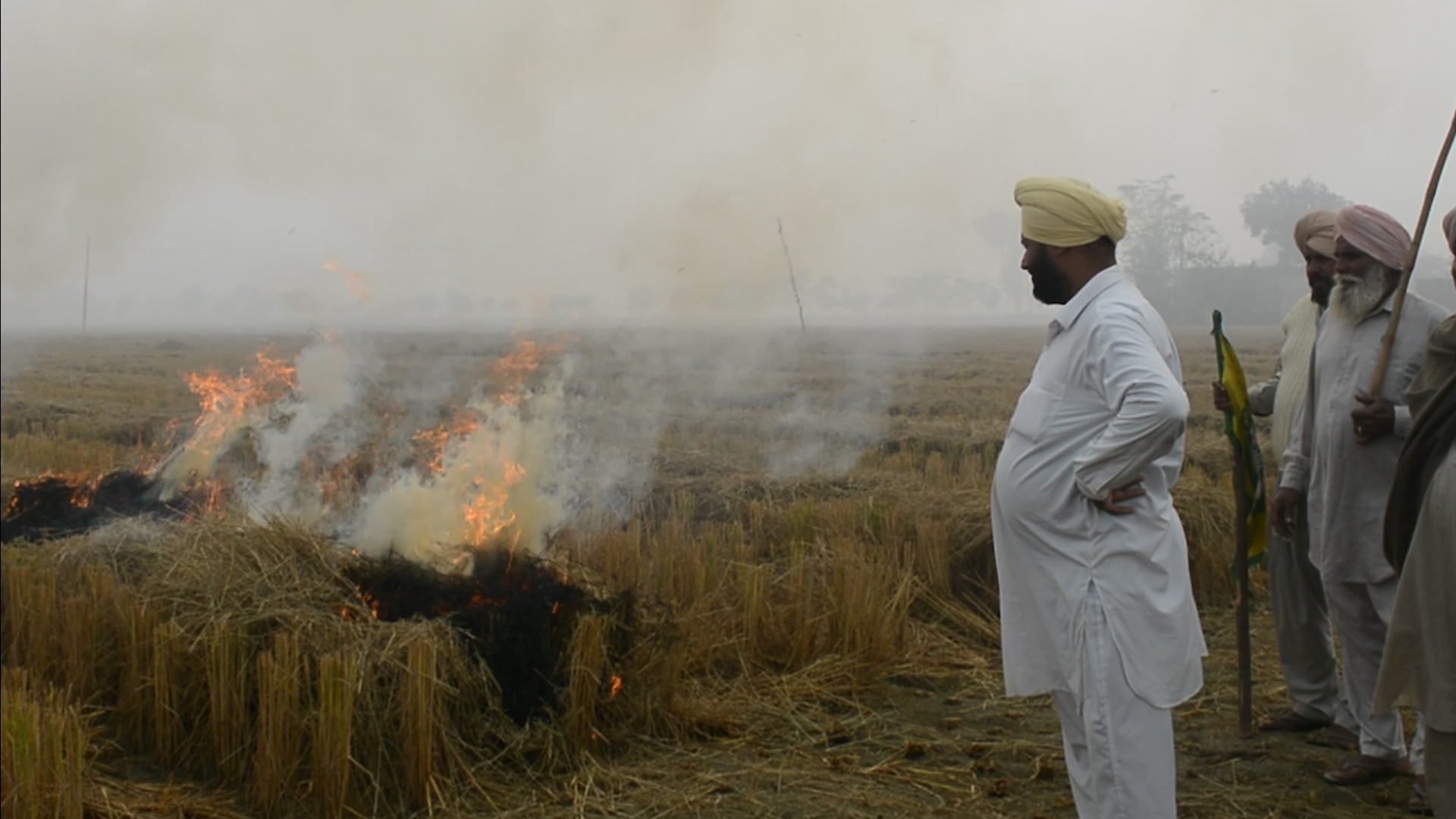 Watch: Why Farmers Are Burning Stubble in Punjab