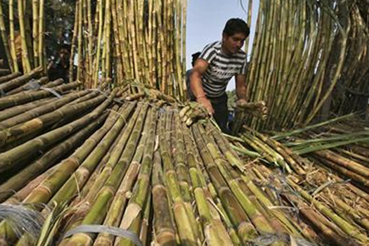 Bihar: Election Rallies Bring Defunct Sugar Mills to the Centre Stage, But it's All Talk, No Action