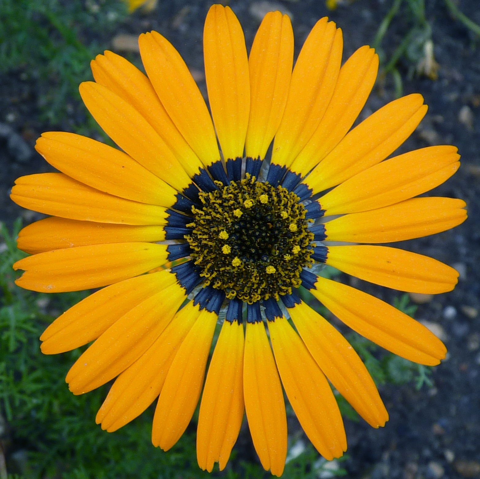 Flowers With Halos, Asexual Worms, Vicious Tadpoles and Other Amazing Animals