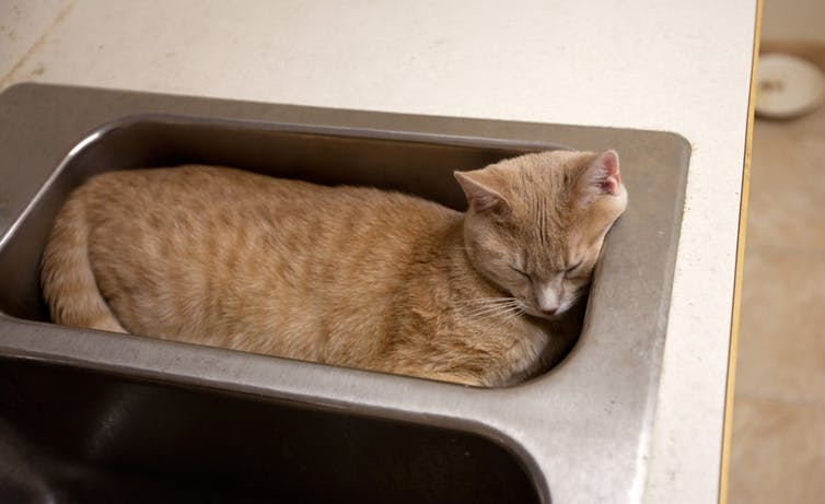 Answering the Question That Won Me the Ig Nobel Prize: Are Cats Liquid?