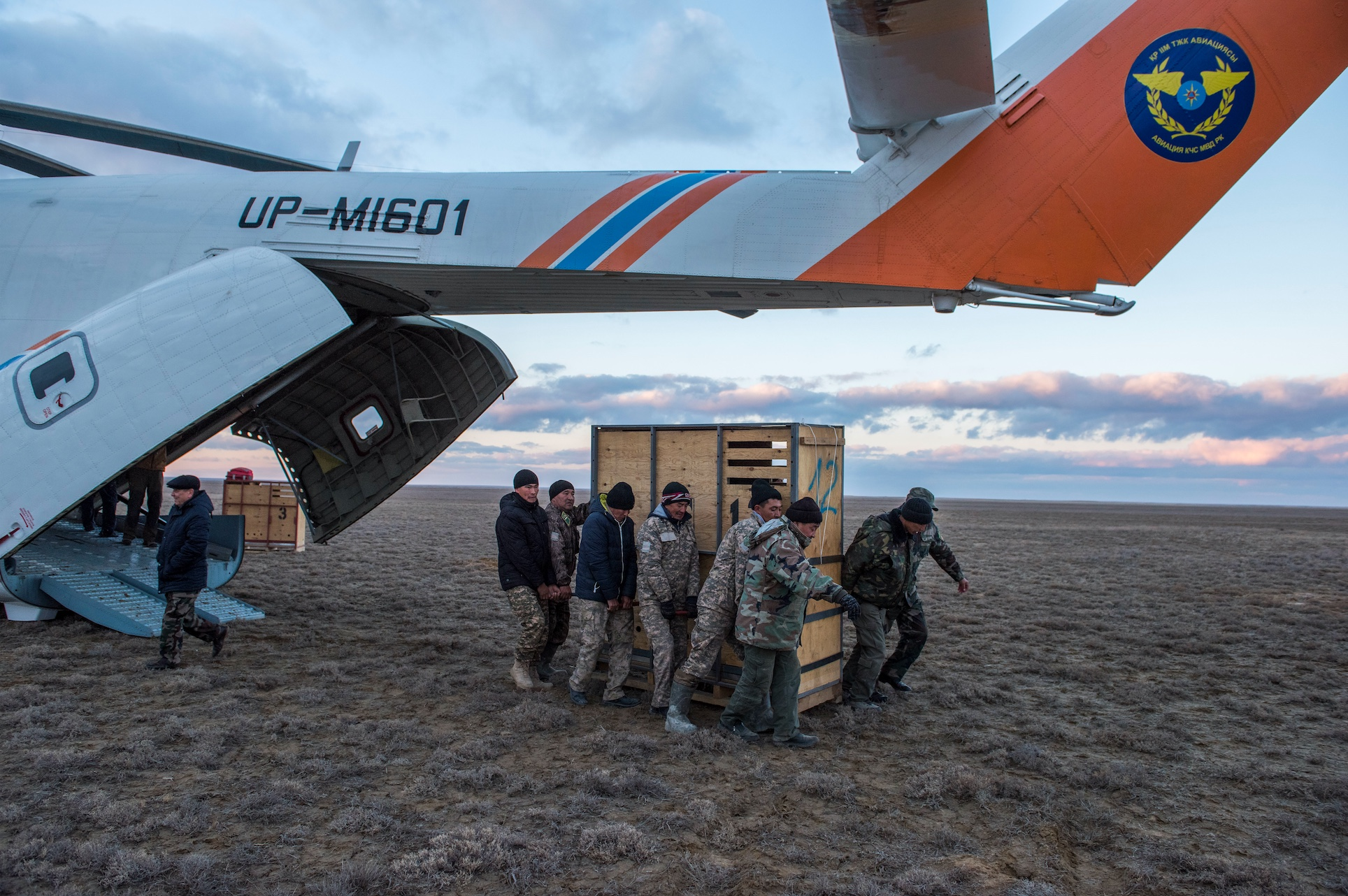A box with a kulan being unloaded from the helicopter at Alibi, Torgai, Kazakhstan. © Daniel Rosengren