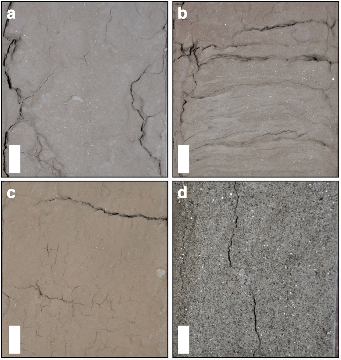 Detailed sedimentary features of core recovered from site GS10 at Kalibangan. Scale bar is 1 cm in all images. (a) Silty clay at 2 m depth;(b) interlaminated silt and very fine sand at 4 m depth;(c) red-brown clayey silt at 6.5 m depth; and(d) grey micaceous fine sand at 17 m depth. Caption and credit:DOI: 10.1038/s41467-017-01643-9