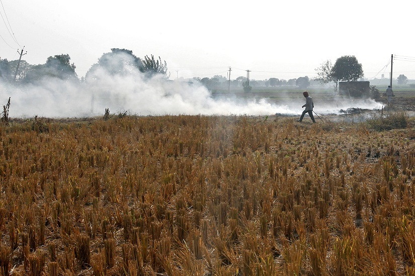 Debate: Crop-Burning Fixes Must Not Preserve Paddy-Wheat Status Quo